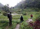 Cibeusi Rice Field